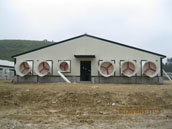 Steel Structure Poultry House XGZ-014